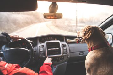 Everything You Need to Consider When Traveling With Pets