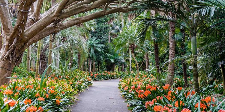 Paved walkway between orange flowers and tropical trees.