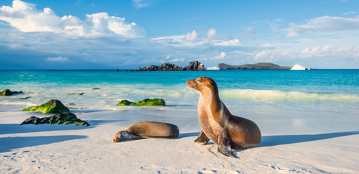 Two sea lions on the beach with ocean in the background. One is lying down and the other is propped up on his fins.