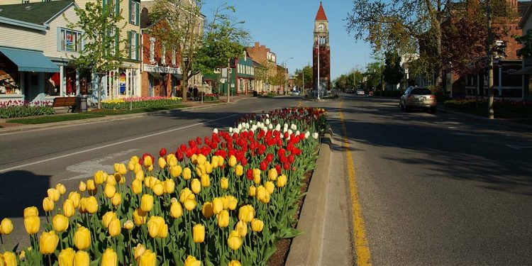 Tulips lining middle of street with historic buildings on either side and clock tower in the distance