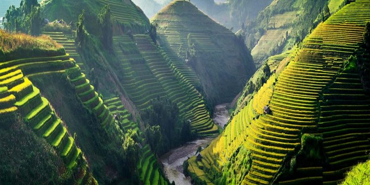 Green hills in Vietnam