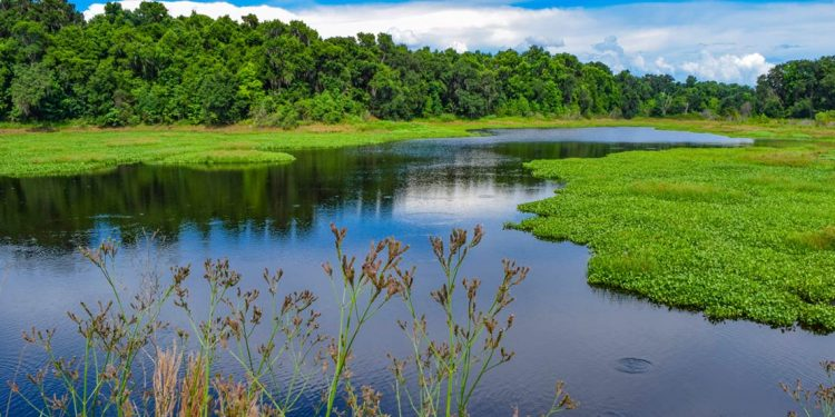River surrounded by greenery in Gainesville, Florida