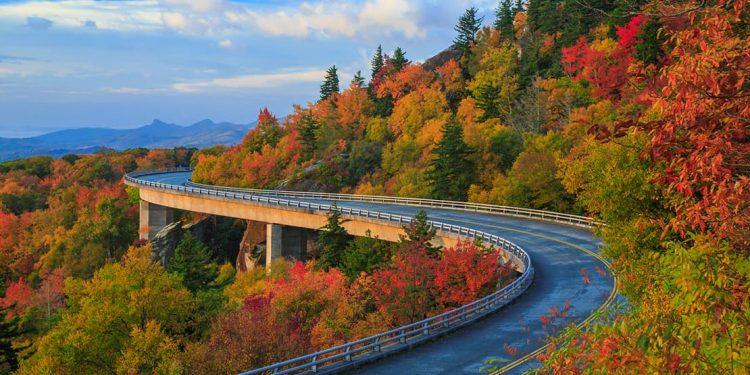 winding bridge through a forest