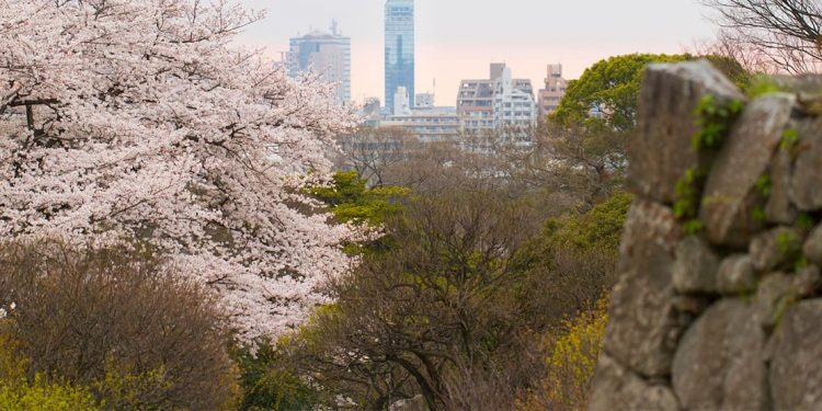 city skyline seen beyond cherry blossom trees and other foliage