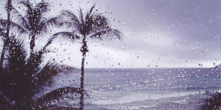 rain covered window with palm trees in the background