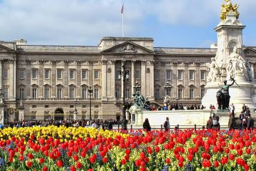 Tulips growing in front of Buckingham Palace