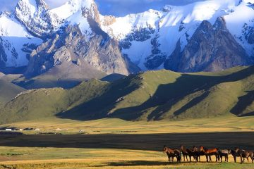 A group of horses stands on grassy plains with snow-topped mountains in the background