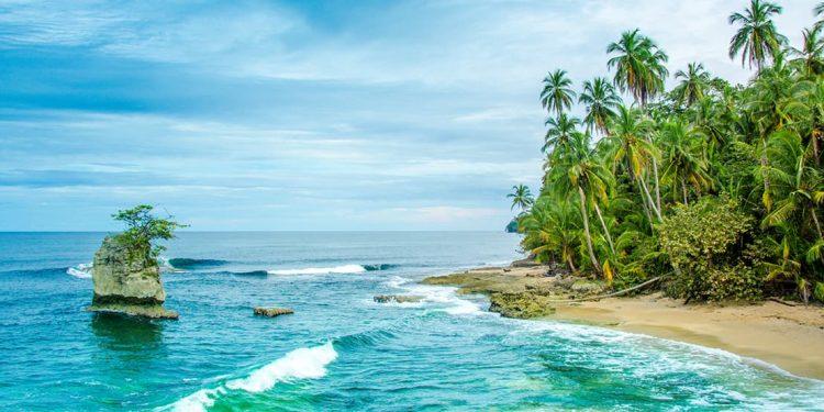 Palm trees lead down to a narrow strip of beach