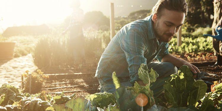 man wearing plaid gardening in the sunshine