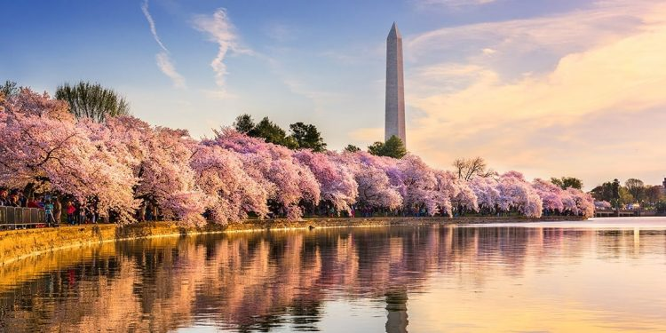 Cherry trees in bloom line the waterfront with the Washington Monument in the background