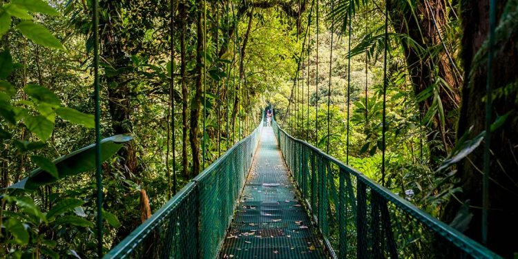 A long metal bridge contains continues into the distance with numerous jungle-like trees surrounding both sides