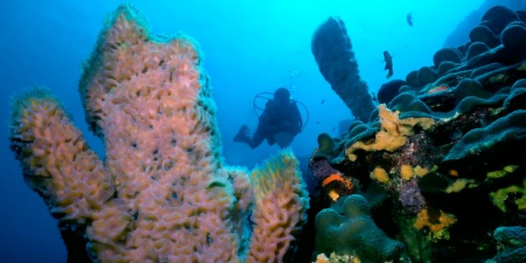 Scuba diver swimming up to colorful reef with fish all around.