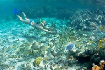 Woman in bikini with snorkel and mask swimming along ocean floor into a school of beige colored tropical fish.
