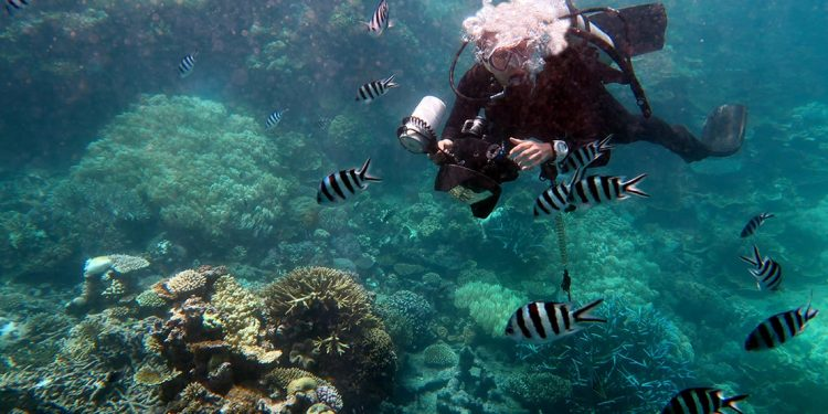 Diver with underwater camera swims among white and black striped tropical fish with coral reef below.