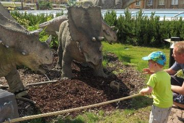 Dad crouching down beside toddler son who is holding onto rope barrier between him and models of triceratops.