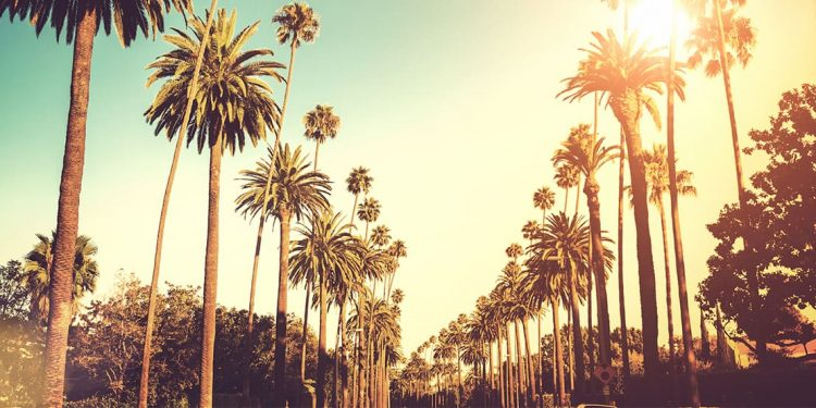 Palm trees lining a street.