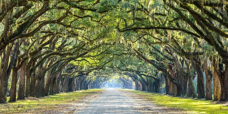 Trees form an arch over a long straight road