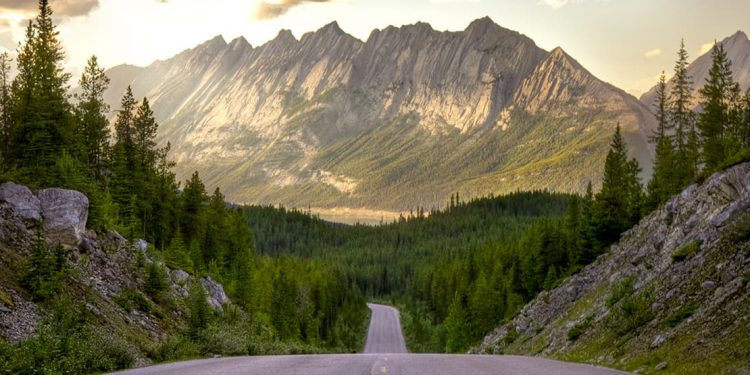Road with pine trees on either side leading into a mountain range.