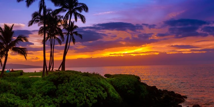 Palm trees on a grassy coast with a pink and purple sunset.