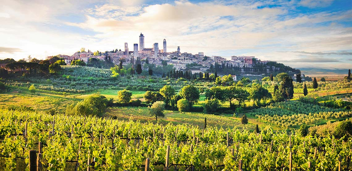 A vineyard in the hills surrounding San Gimignano.