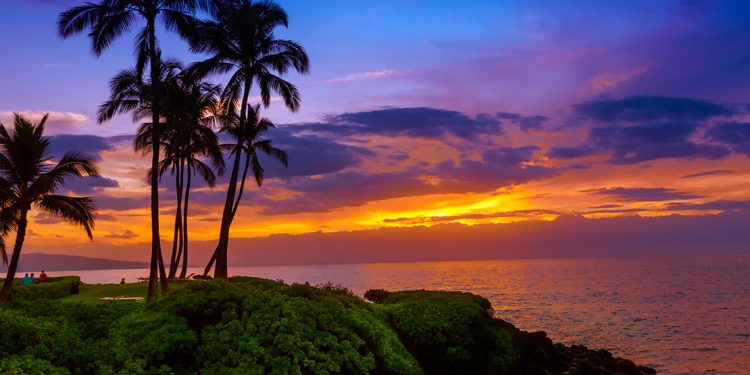 Palm trees on the coast with a purple and orange sunset.