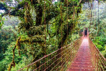 Suspended bridge through the jungle.