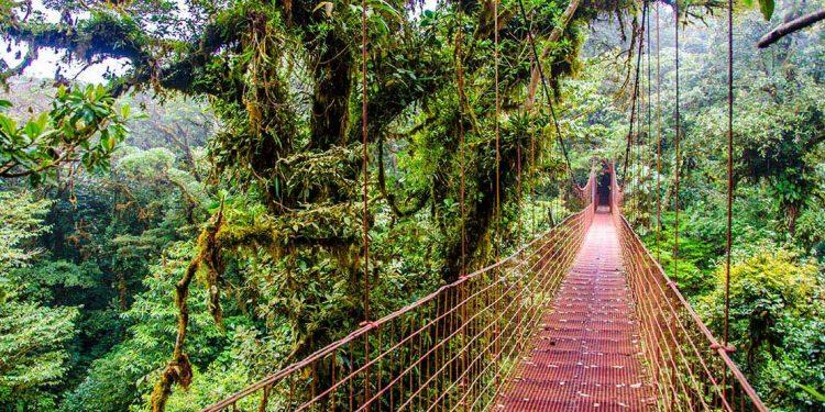 Suspended bridge through the jungle.
