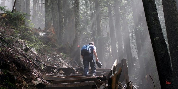 Man with backpack walking up uneven wooden steps on side of a hill with thick trees and beams of light streaming down into the forest.