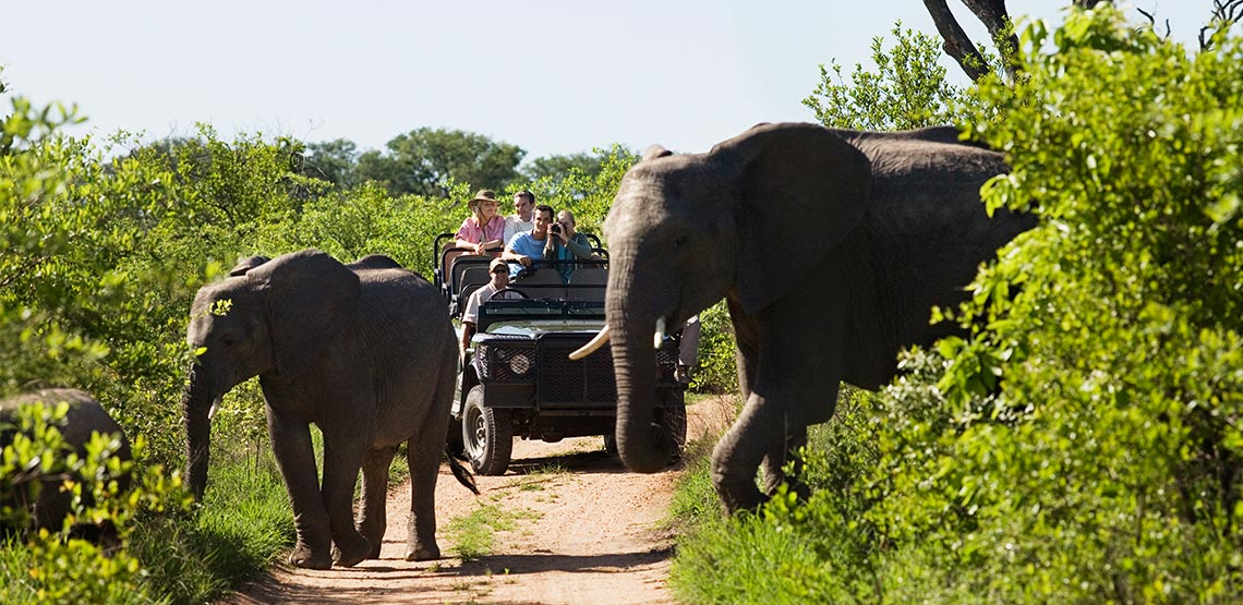 Line of elephants crossing path with green foliage on either side. Safari jeep parked behind them as people watch them cross and take photos.