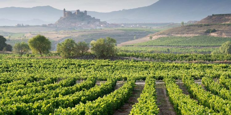 Green vineyard with castle on a hill in background.