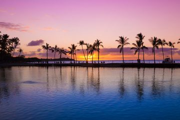 Ocean with palm trees at sunset.