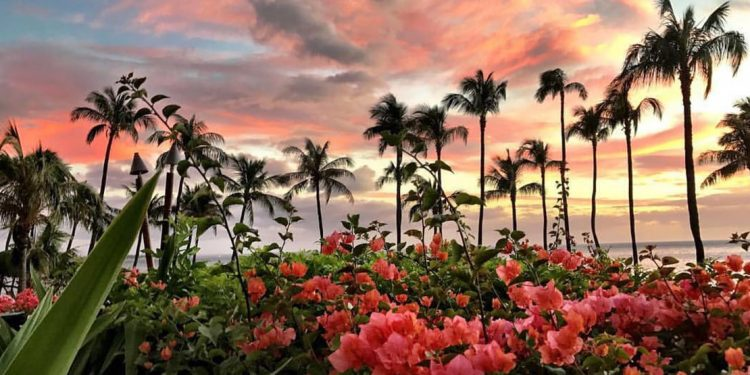 Pink flowers and palm trees at sunset