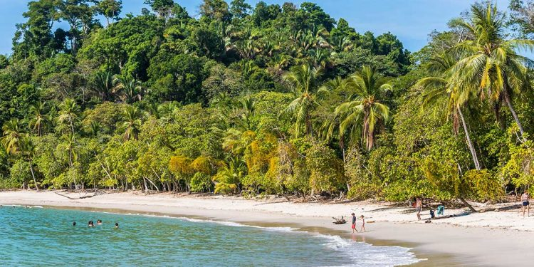 the beach in Manuel Antonio National park, costa rica
