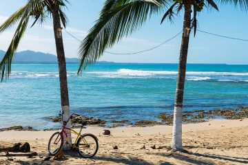 a bicycle sits in front of a palm tree in puerto viejo costa rica