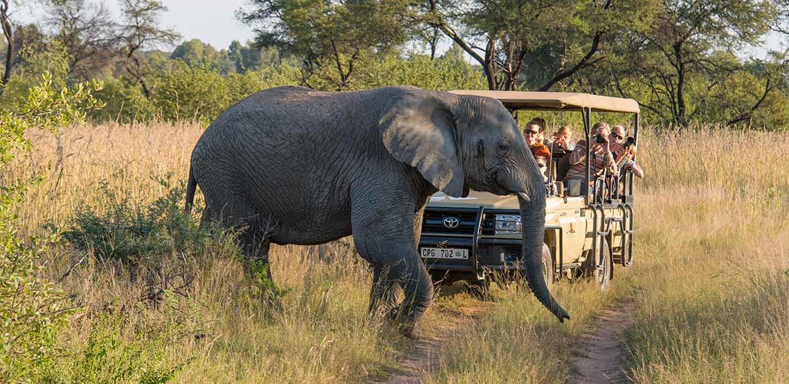 An elephant passes in front of a safari car.