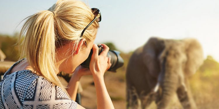 A woman takes a photo of an elephant