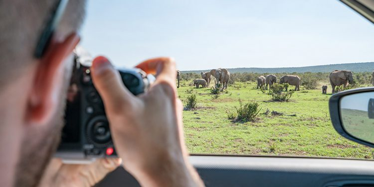 Man taking photo of elephants out car window.