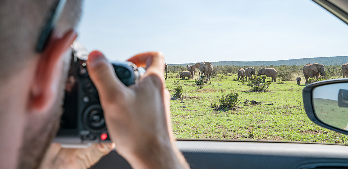 Man taking photo of elephants out car window.