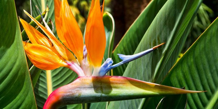 Bird Paradise. Tenerife, Canary Islands