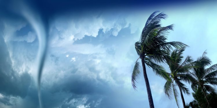 palm trees wave in the wind from a tornado