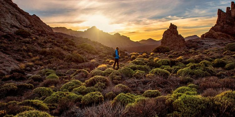 rocky landscape with green bushes in Teide park on Tenerife island on the sunset