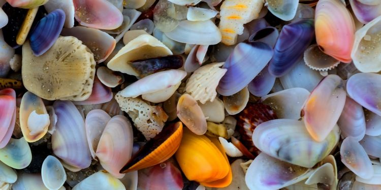Colorful small shells