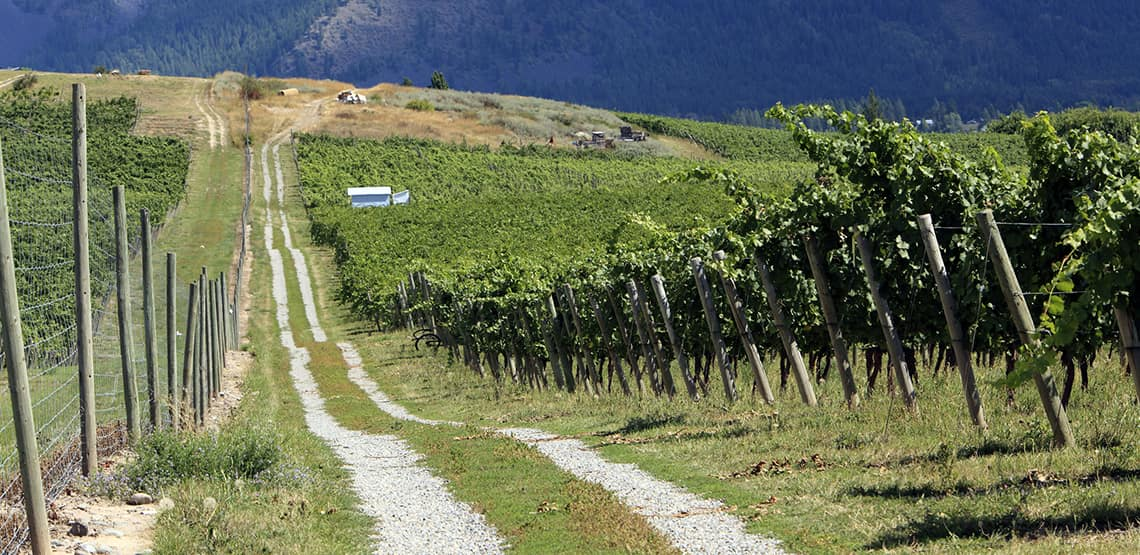 Vineyard near Creston, British Columbia