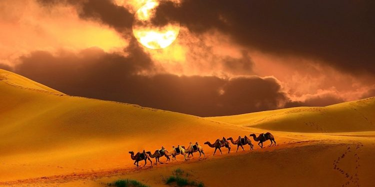 Camel trekking in Mongolia