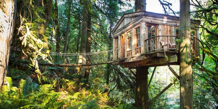 Treehouse with rope bridge leading to its door