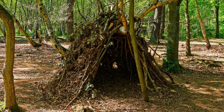 Shelter made in the woods
