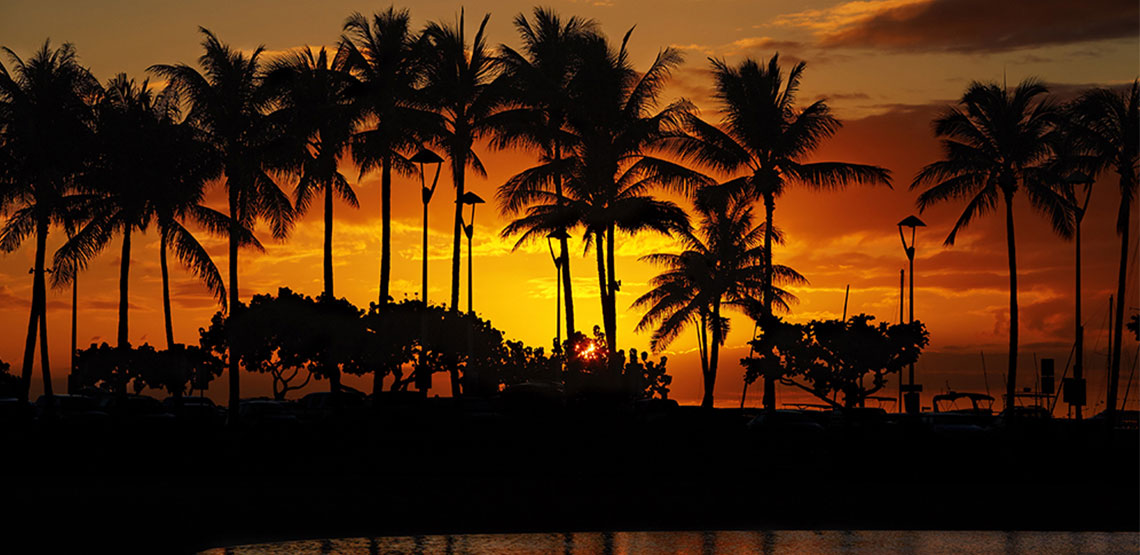 Sunset silhouetting palm trees