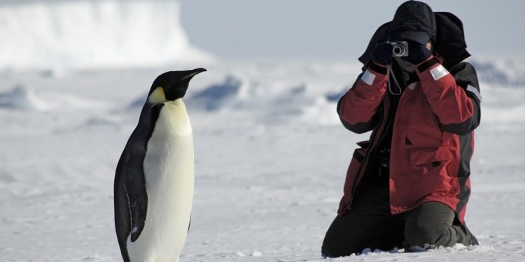 Tourist capturing photo of penguin in the Antarctic