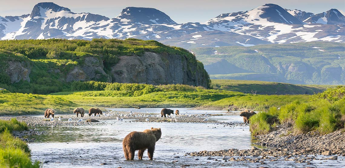 Brown bears standing in river with mountains in background