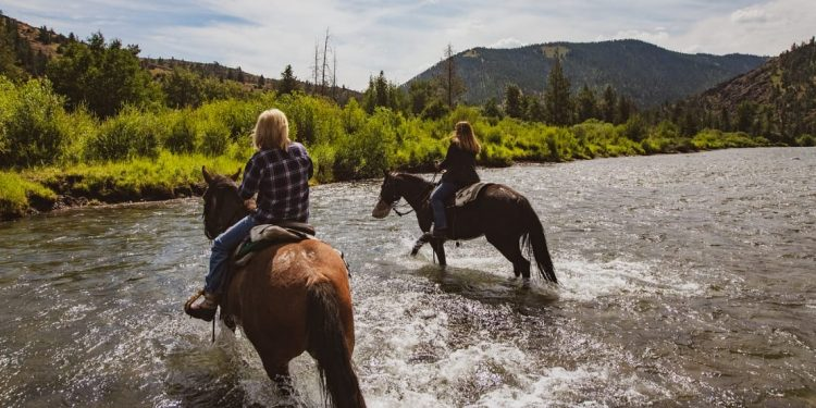 Horses crossing a river at Crossed Sabres Ranch